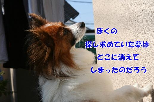 d0013149_22292682.jpg
