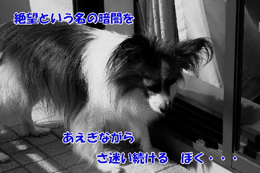 d0013149_22293824.jpg