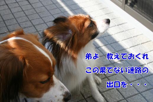 d0013149_22295071.jpg