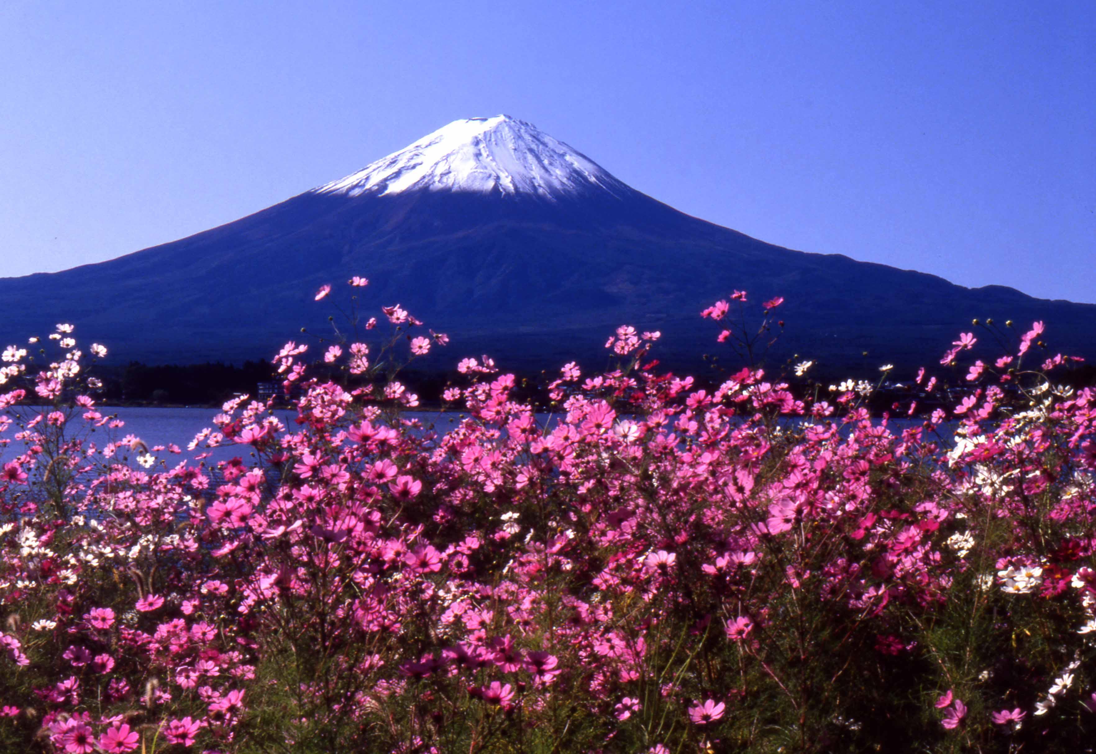 富士とコスモス_b0093088_7292630.jpg