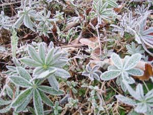 霜が降りました_f0096216_19504628.jpg