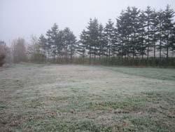霜が降りました_f0096216_19562376.jpg