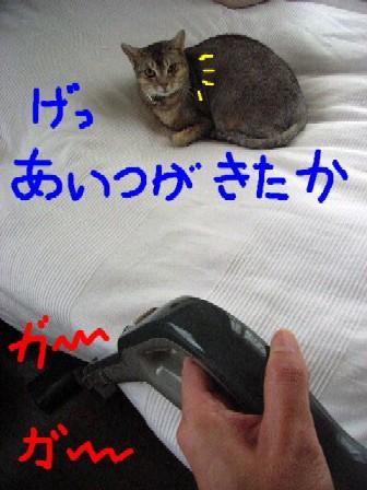 d0081025_1992710.jpg