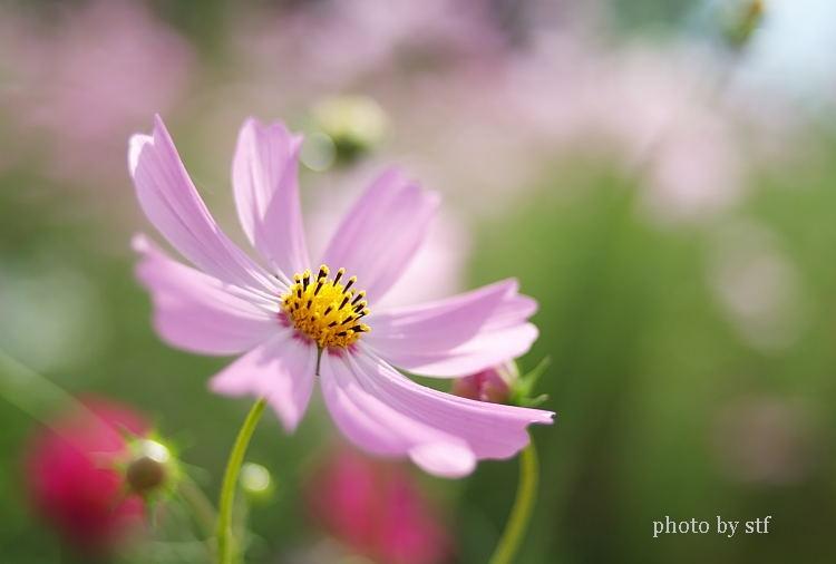 f0030527_15475167.jpg