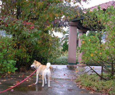 2006年10月29日(日)雨上がりの紅葉_f0060461_9593692.jpg
