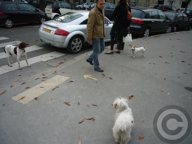 ■街角の犬(パリPARIS)_a0008105_5424285.jpg