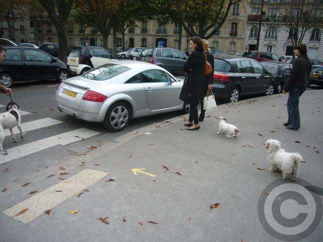 ■街角の犬(パリPARIS)_a0008105_54321.jpg