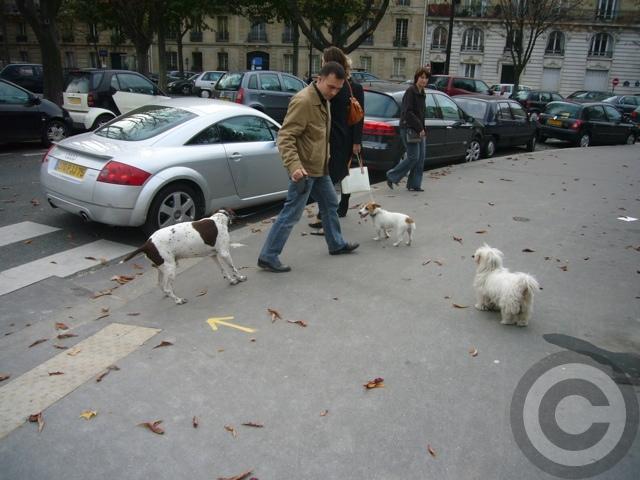 ■街角の犬(パリPARIS)_a0008105_5432268.jpg