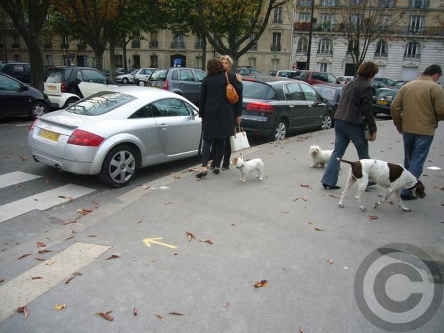 ■街角の犬(パリPARIS)_a0008105_5434029.jpg