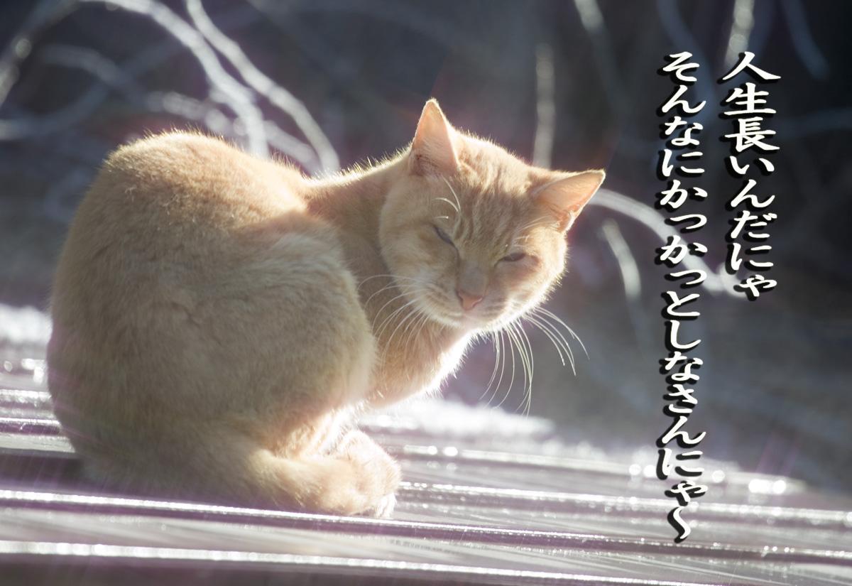 d0073620_20135331.jpg