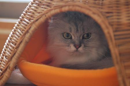 猫ベッドの1階_a0020021_22253458.jpg