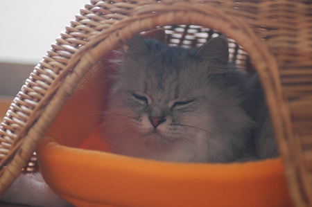 猫ベッドの1階_a0020021_2226667.jpg