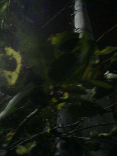 秋の桜。_e0013944_22312480.jpg