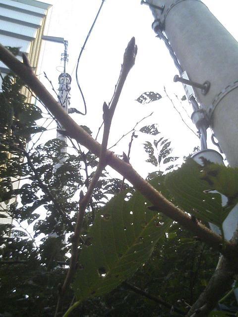 秋の桜。_e0013944_22335363.jpg