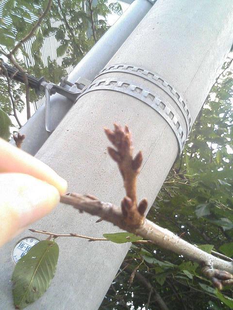 秋の桜。_e0013944_2235625.jpg