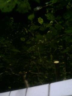 秋の桜。_e0013944_22383221.jpg