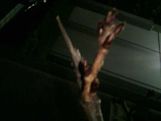 秋の桜。_e0013944_23441463.jpg