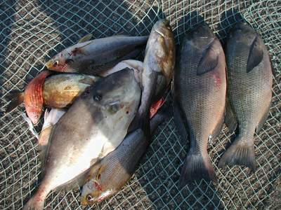 いまりマリーナ秋季釣大会2006_a0077071_8264979.jpg