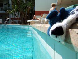 イヌくん泳ぐ_b0071706_10491363.jpg