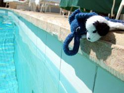 イヌくん泳ぐ_b0071706_104915.jpg