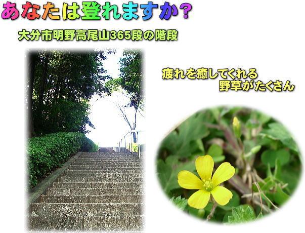 ホームページ「サイトマップ」を活用してください_d0070316_63551100.jpg