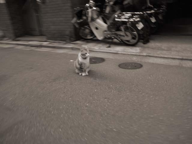 「猫」_e0096928_1334510.jpg