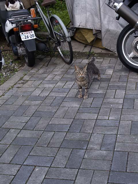 「猫」_e0096928_1342945.jpg