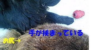 f0077931_1630138.jpg