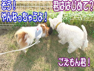 f0011845_011468.jpg