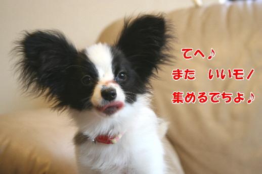 d0013149_20303476.jpg