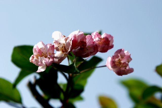 狂い咲き_f0044056_6121647.jpg