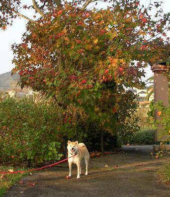 2006年10月31日(火)・・・ネックウォーマーとお菓子です!_f0060461_221417.jpg