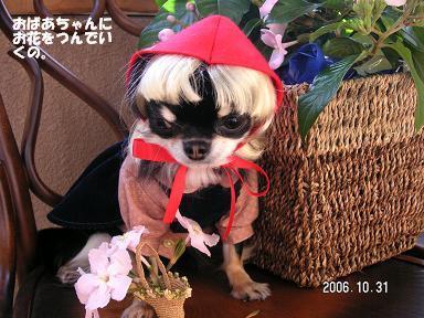 Happy Halloween_d0006467_17395976.jpg