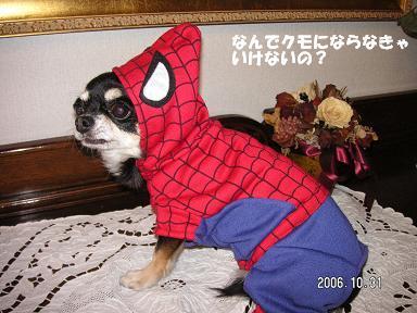 Happy Halloween_d0006467_17455613.jpg