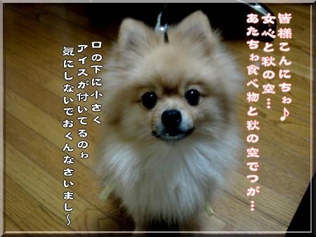 b0078073_16594317.jpg