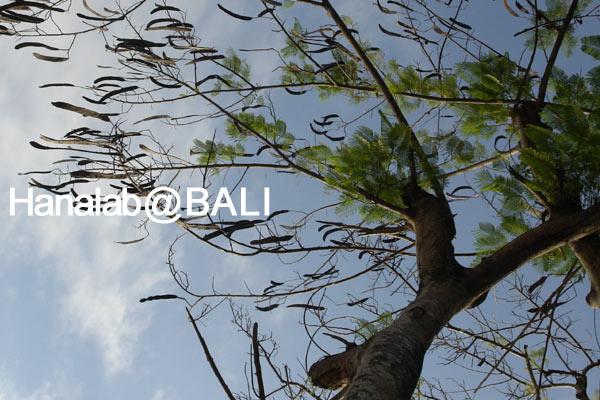 b0080196_23292662.jpg