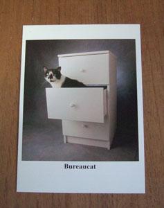 猫カート写真
