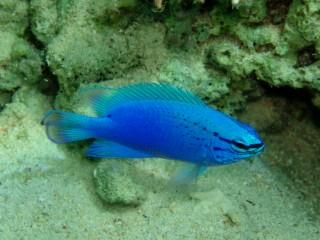 06・11.1 幸せの青い雑魚part2_b0100730_23194974.jpg