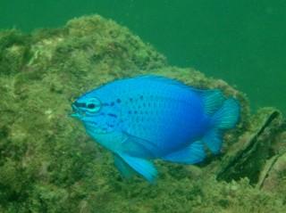 06・11.1 幸せの青い雑魚part2_b0100730_23295097.jpg