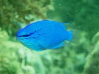 06・11.1 幸せの青い雑魚part2_b0100730_23352464.jpg