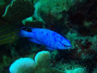 06・11.1 幸せの青い雑魚part2_b0100730_23511588.jpg