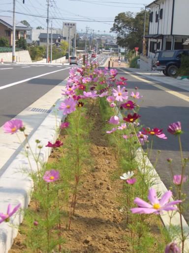 木花小学校の花の植栽のその後2_f0105533_2414992.jpg