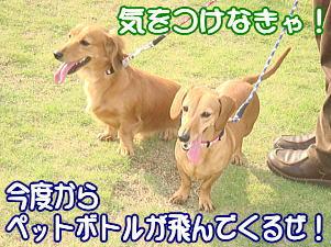 f0011845_0384181.jpg