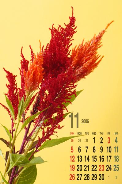 11月のカレンダー・ケイトウ_a0003650_1317738.jpg