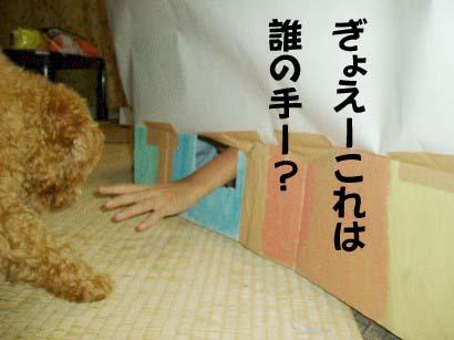 f0061283_1650257.jpg