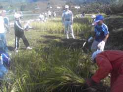 小学校の稲刈り。_f0018099_20101640.jpg