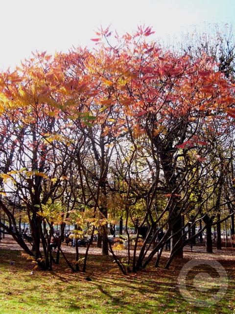 ■秋のリュクサンブルグ公園(パリPARIS)_a0008105_4585354.jpg