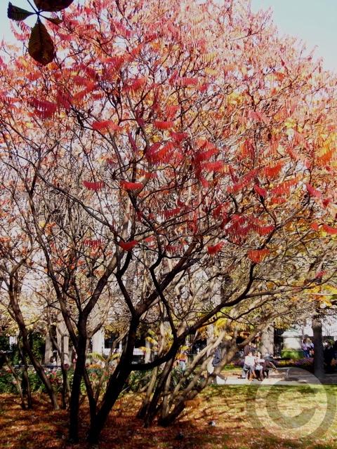 ■秋のリュクサンブルグ公園(パリPARIS)_a0008105_511025.jpg