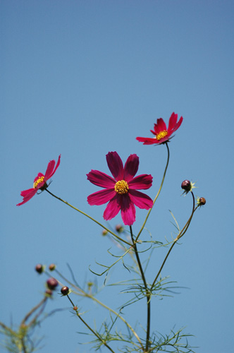 畑の花たち_f0012718_2135278.jpg