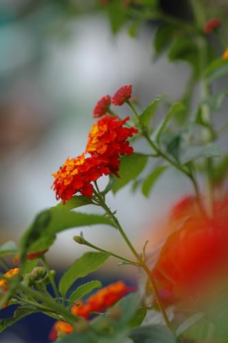 畑の花たち_f0012718_2143163.jpg